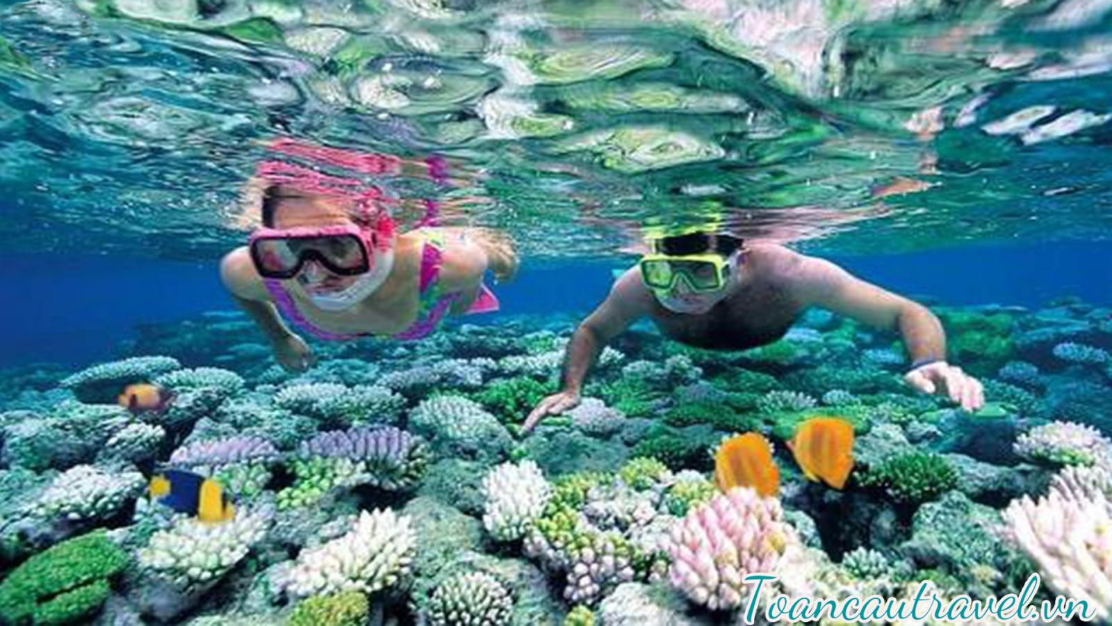 Lặn ngắm san hô cực đẹp tại Phú Quốc