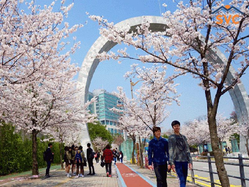 Học tập tại các trường hệ cao đẳng Hàn
